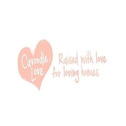 Cavoodle Love